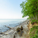 A Shore with fallen Trees